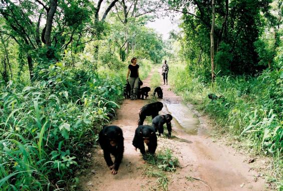 Mission Chimpanzés en Guinnée