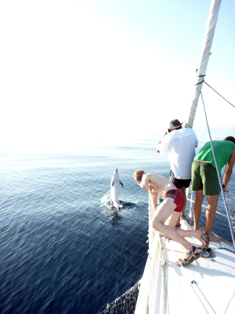 Mission cétacé en Méditerranée