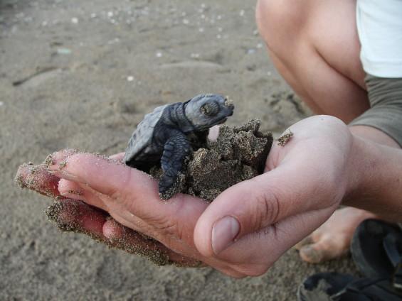mission protection des tortues en Grèce avec volontaire pour la nature