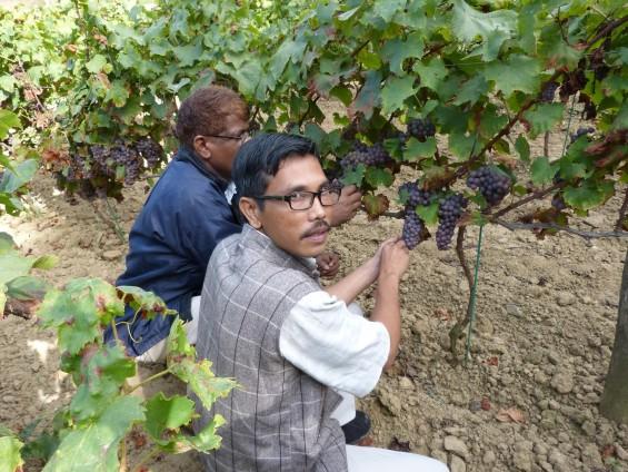 Tamadi représent les richesses agricoles du monde entier, et permet de les rapprocher