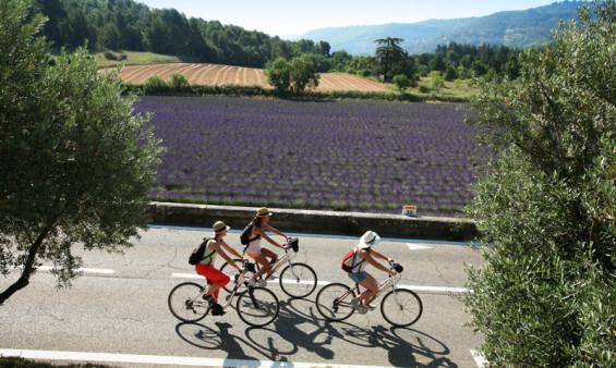 Lavandes, soleil, calmes : le vélo en Provence c'est le Paradis (crédit Nelson Valbrun)