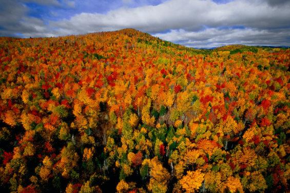 Forêt d'automne au Québec