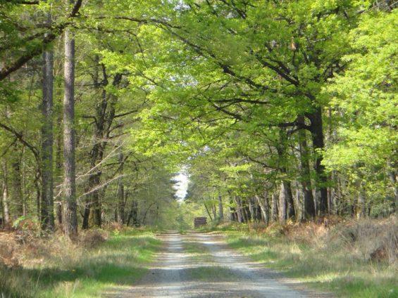 Ecotourisme en forêt