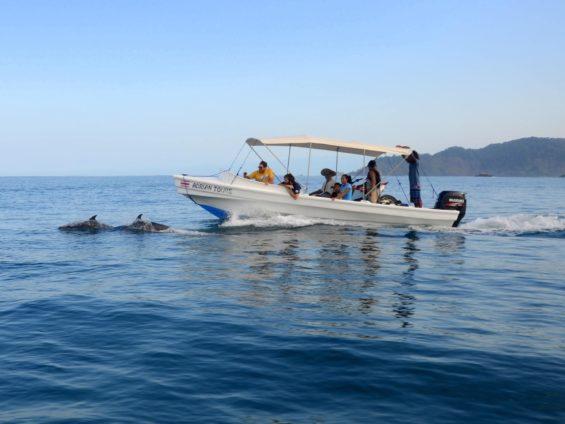 Les dauphins accompagnent l'entrée dans l'océan