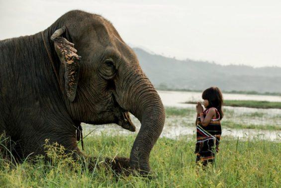 Petite fille Mnong - éléphant