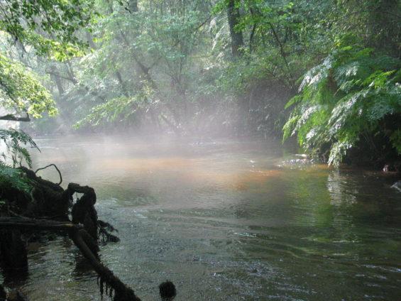 La Grande Leyre, douzième cours d'eau français labellisé Site Rivière Sauvage par l'association SOS Loire devenue l'European Rivers Network à l'origine du label « Site Rivière Sauvage »