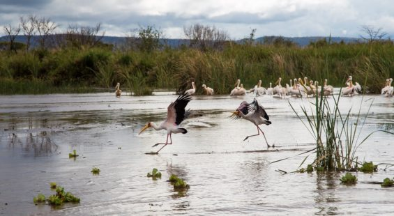 Lac Chamo - Ethiopie - Idan R