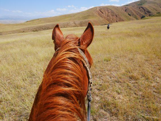 Cheval steppe Kazakhstan