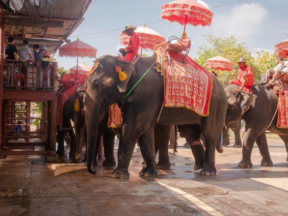 Elephants ayutthaya
