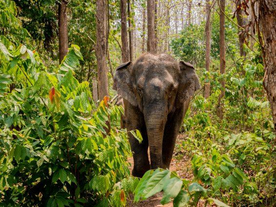 Elephants en Thaïlande