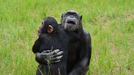 Chimp Eden - Afrique du Sud
