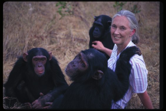 Jane Goodall - Jane Goodall Institute