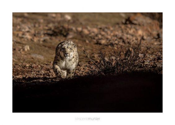 Vincent Munier Photographies