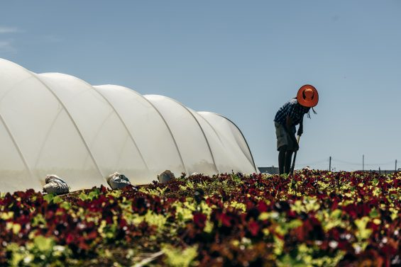 we gatherin - agriculture biodynamique