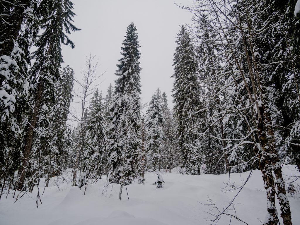 Forêt du Massacre GTJ