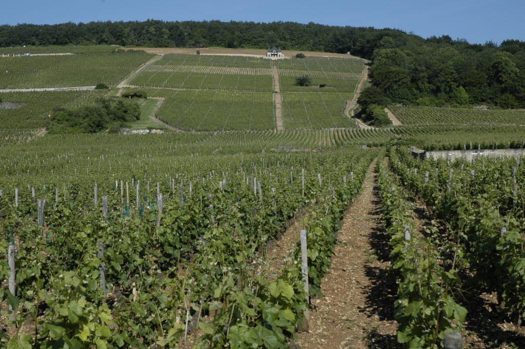 Œnotourisme en Sud-Bourgogne