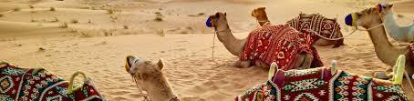 sensibiliser les clients et l'industrie aux dommages causés par l'abattage des dunes