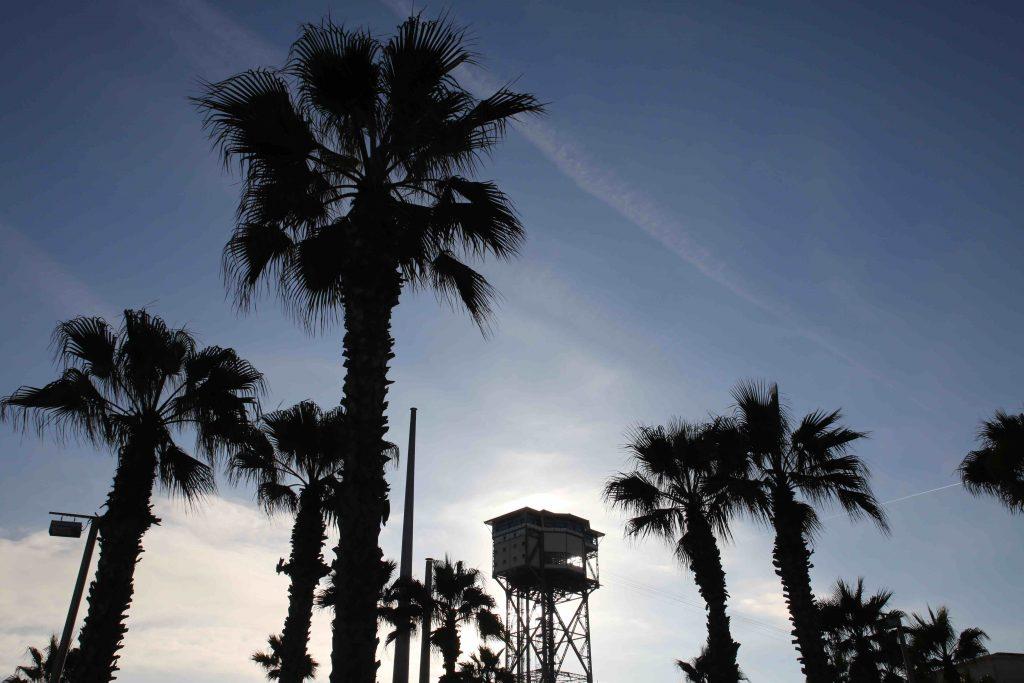 Palmiers sur la plage de Barcelone © Elisabeth Blanchet