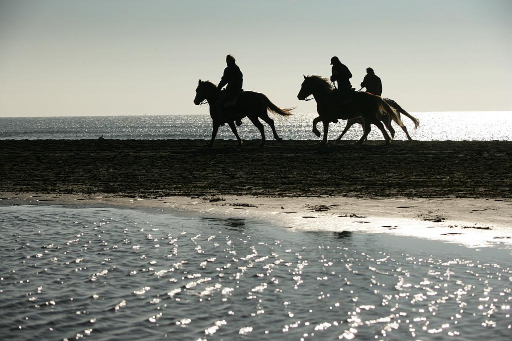 Promenade à cheval sur la plage, photo prise par Olivier Maynard à la Grande Motte (Hérault)