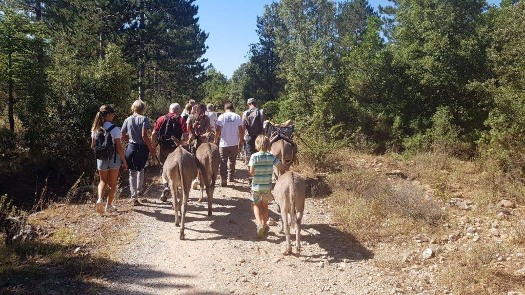 Sur un chemin forestier en Sardaigne, un groupe de dos se balade avec des ânes