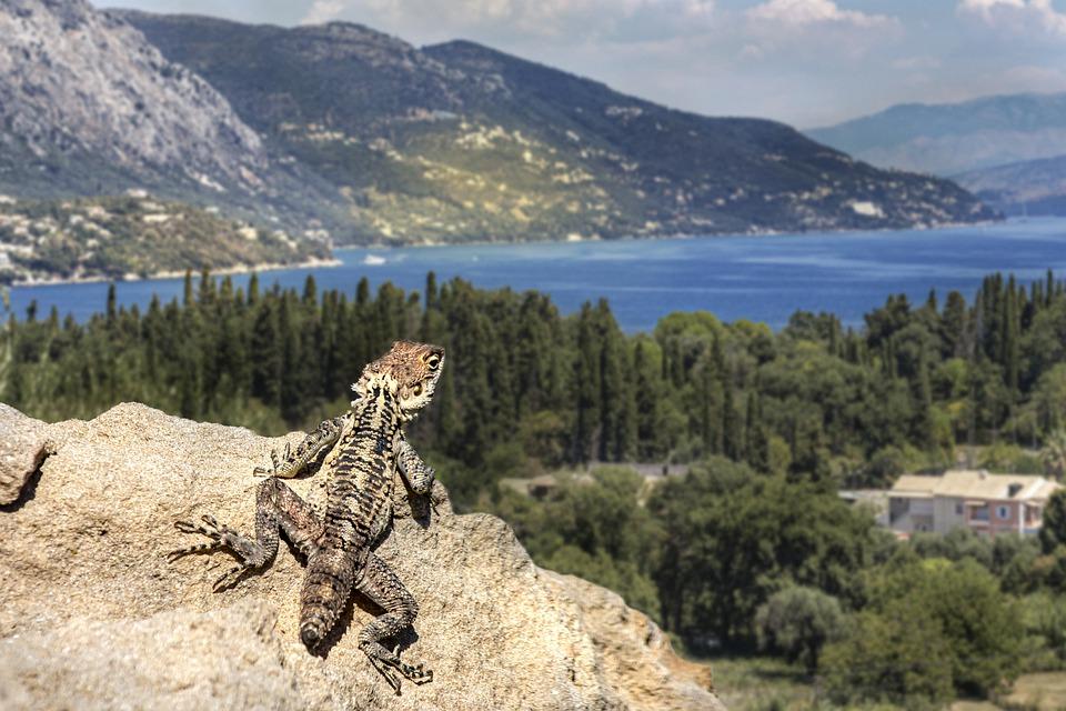 Corfou Grèce