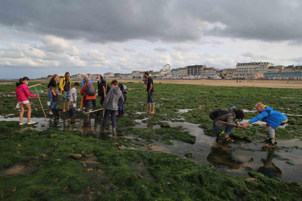 Partie de pêche à pied avec Jean-Yves Jégourel, organisée par l'office du tourisme Terres de Nacre et le CRT Normandie