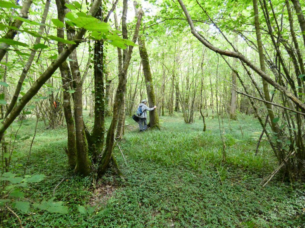 Bain de forêt dans le Calvados en forêt de Grimbosq, guidé par Anne-Lise Mommert, guide Shinrin yoku