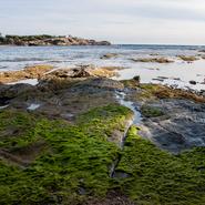 Crique à l'est de l'île des Embiez et point de vue sur la presqu'île du Gaou- Balade photo naturaliste avec Mwanga Vagabonde (Copyright Stéphanie Vigetta)