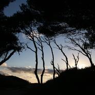 Silhouettes de Pins d'Alep sur l'île des Embiez au coucher du soleil - Balade photo naturaliste avec Mwanga Vagabonde (Copyright Stéphanie Vigetta)