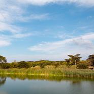 Lagune de Porquerolles et observation d'oiseaux - Balade photo naturaliste avec Mwanga Vagabonde (Copyright Stéphanie Vigetta)