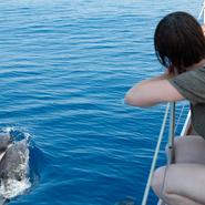 Participants en pleine observation de dauphins au large des côtes varoises - Sortie d'observation et d'étude des cétacés avec Manga Vagabonde (Copyright Stéphanie Vigetta)