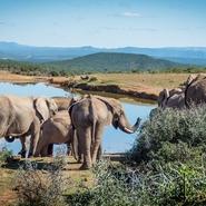 elephant-protection-animaux-sagittarius-voyage-volontariat