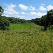 Loita Forest 2