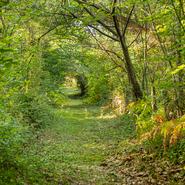 Forêt près Bazas