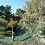 les Olives fierté de la Paysanne