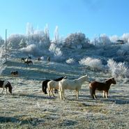 l'hiver en plein air