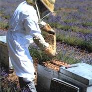 apiculteur-les-ruchers-des-messeguieres