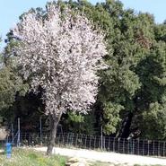 printemps-au-gite-de-lauris