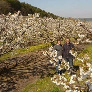 cerisiers-en-fleurs-de-la-famille-bernard-gite-real-frais