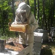 les-ruches-ferme-les-ruchers-de-sallagriffon